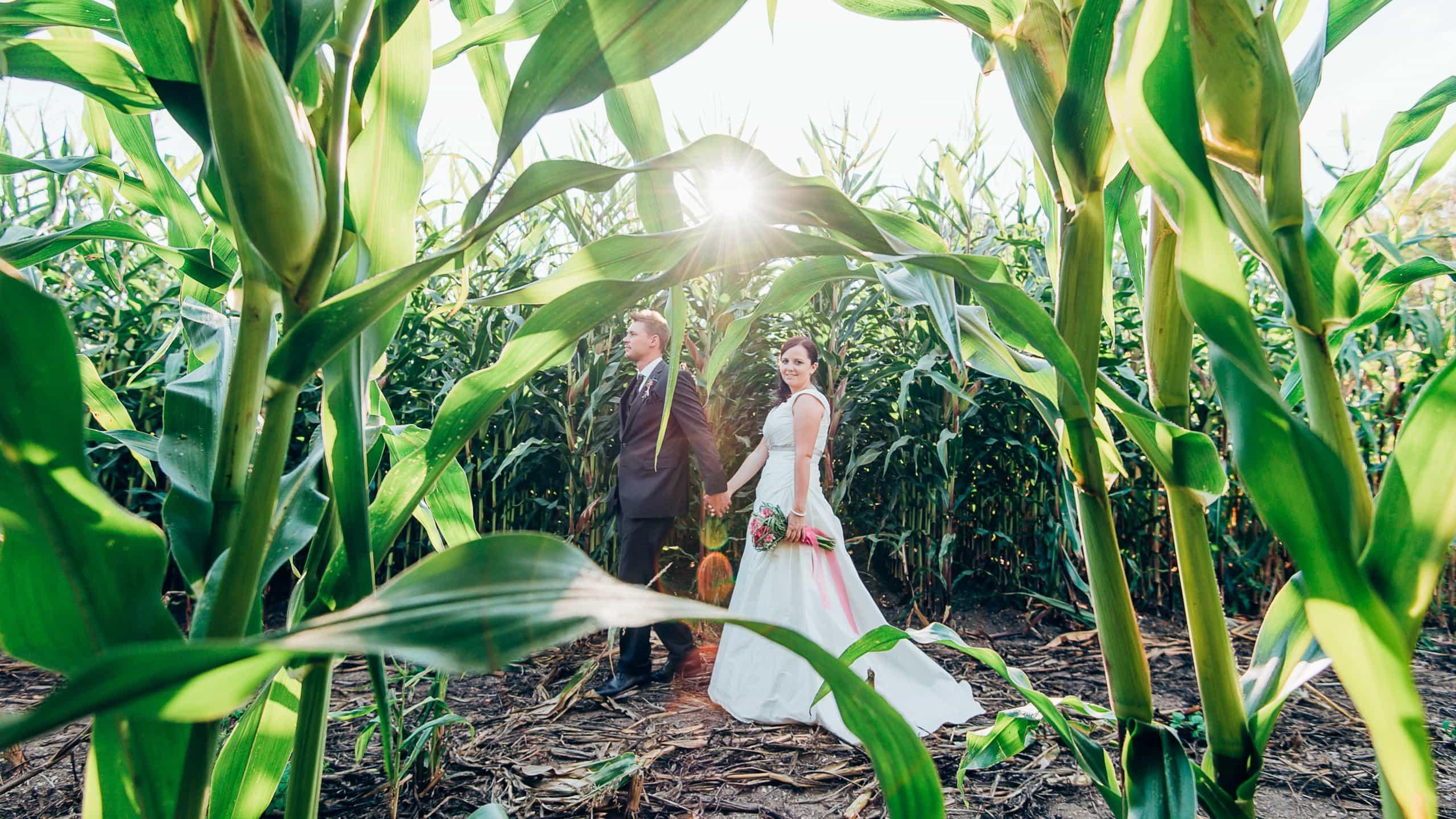 Hochzeitsfotos im Maisfeld mit Gegenlicht